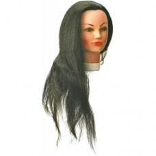 Голова учебная 50-60 см без штатива Sibel 0030551