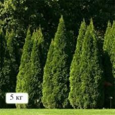 Удобрение для туй и хвойних деревьев, 5 кг