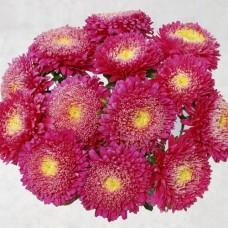 Шанхайська Троянда темно-рожева 1000 шт